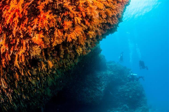 Scuba Ventures - Coral Wall