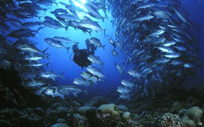 School of fish at Kavieng, Papua New Guinea