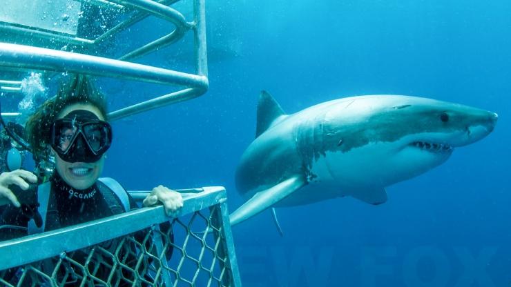 Rodney Fox Shark Dive