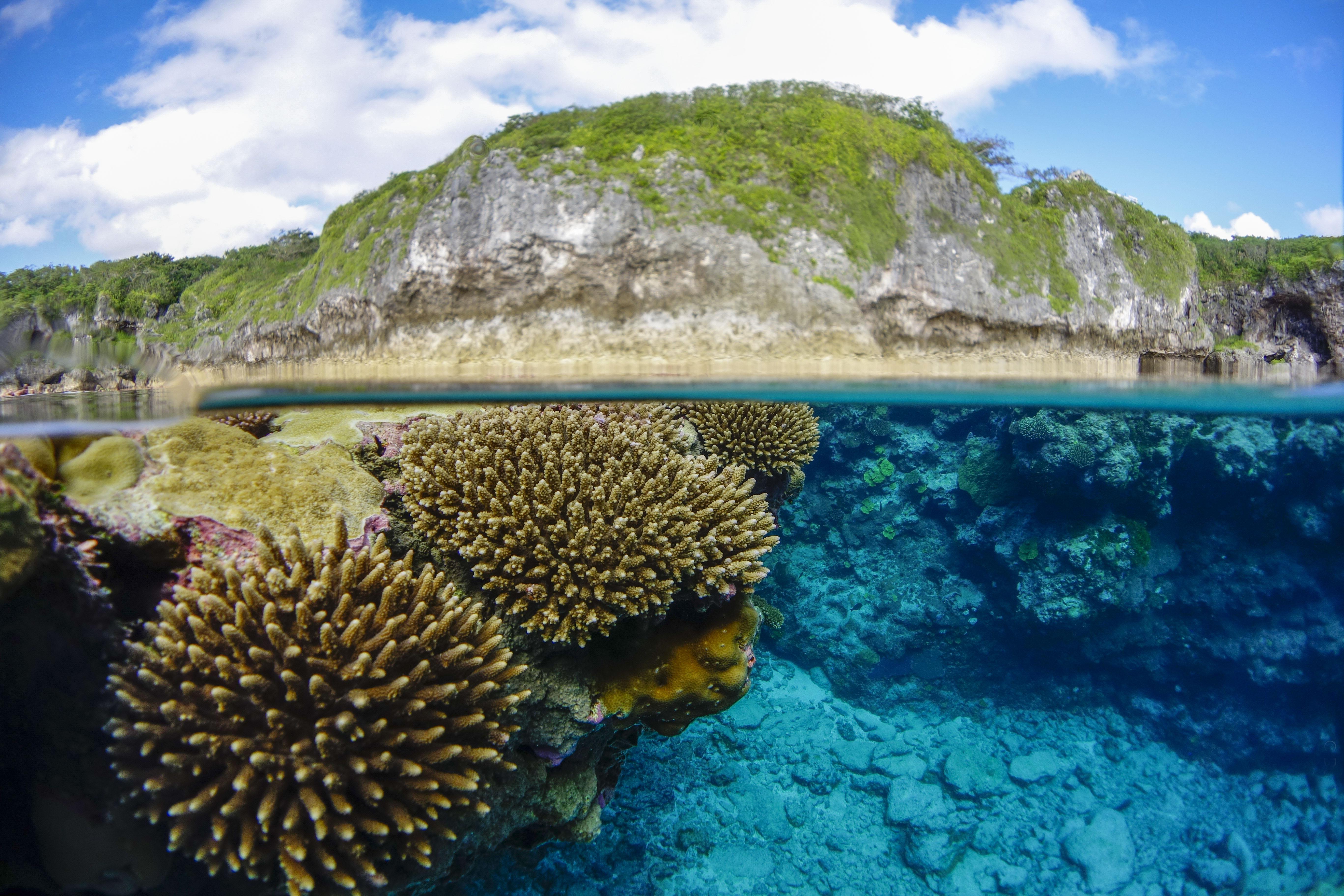 Dive Niue Diving Tours