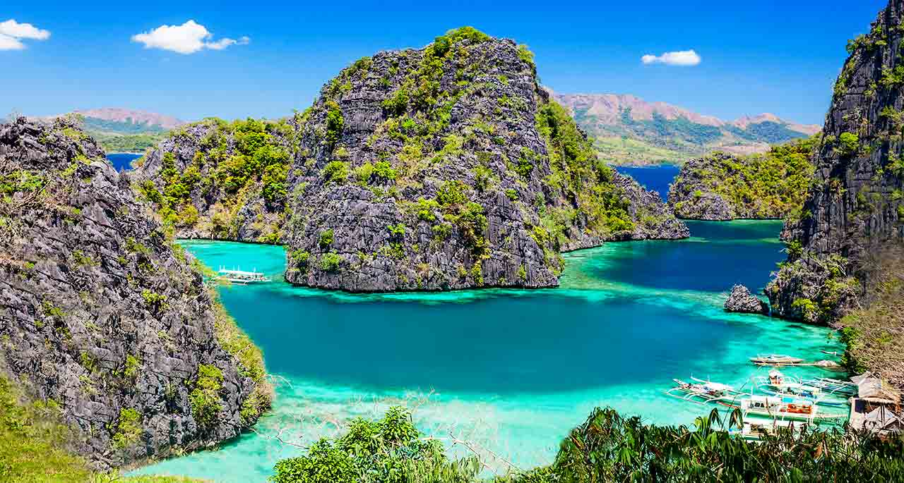 diving philippines best diving in asia diving with whales