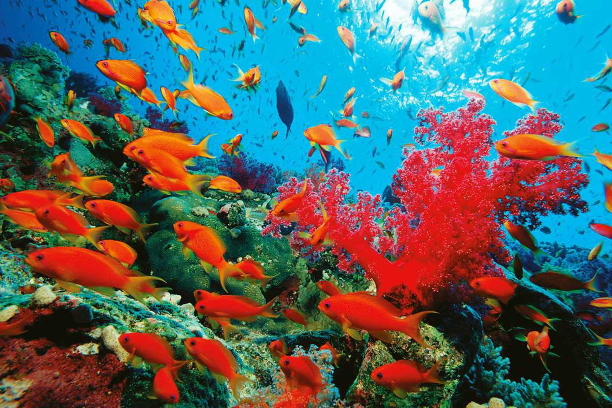 Red-Sea-Master-Liveaboard