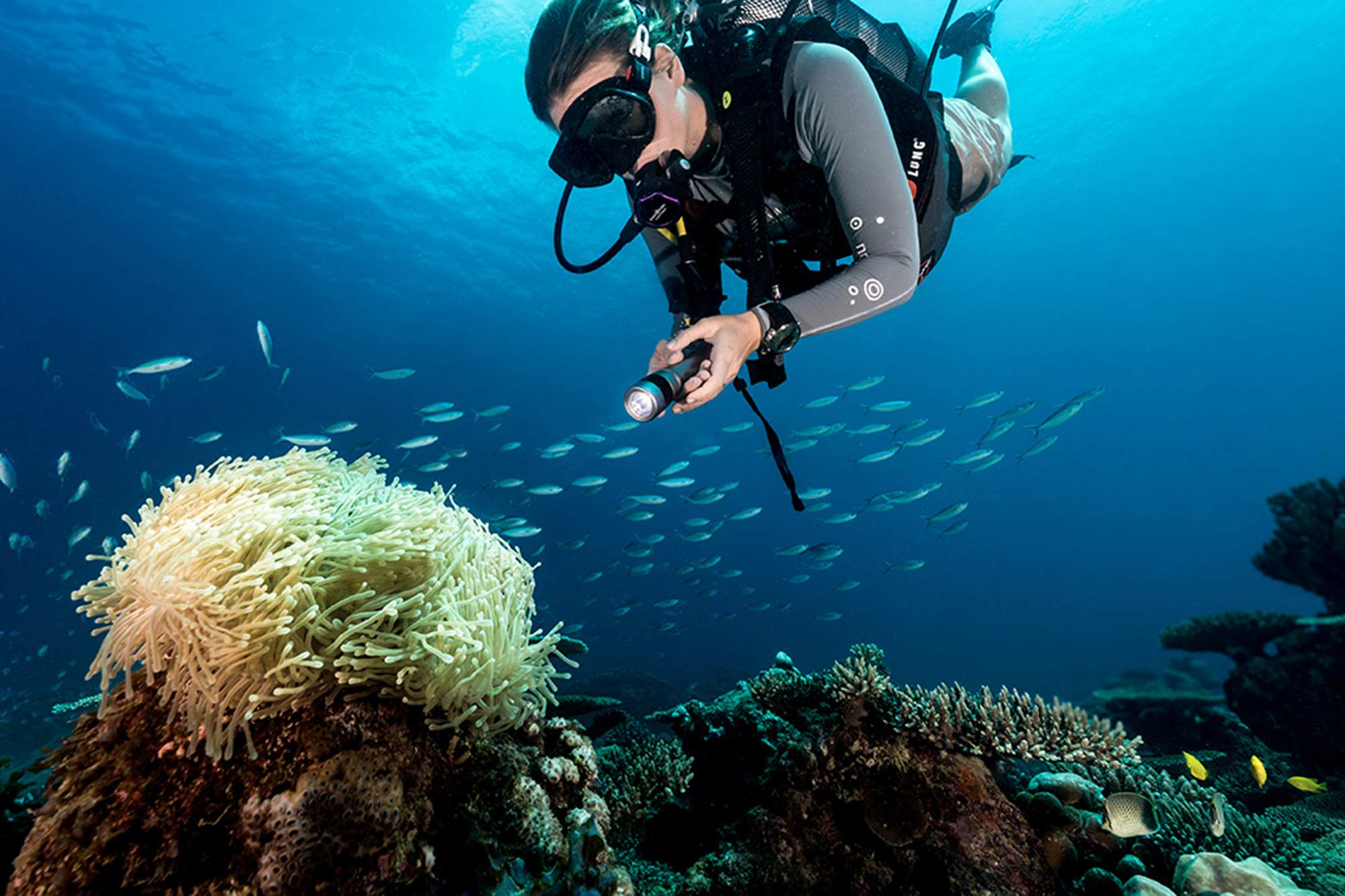 Port vila dive holidays for Dive centres