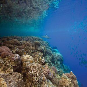 Uepi Island