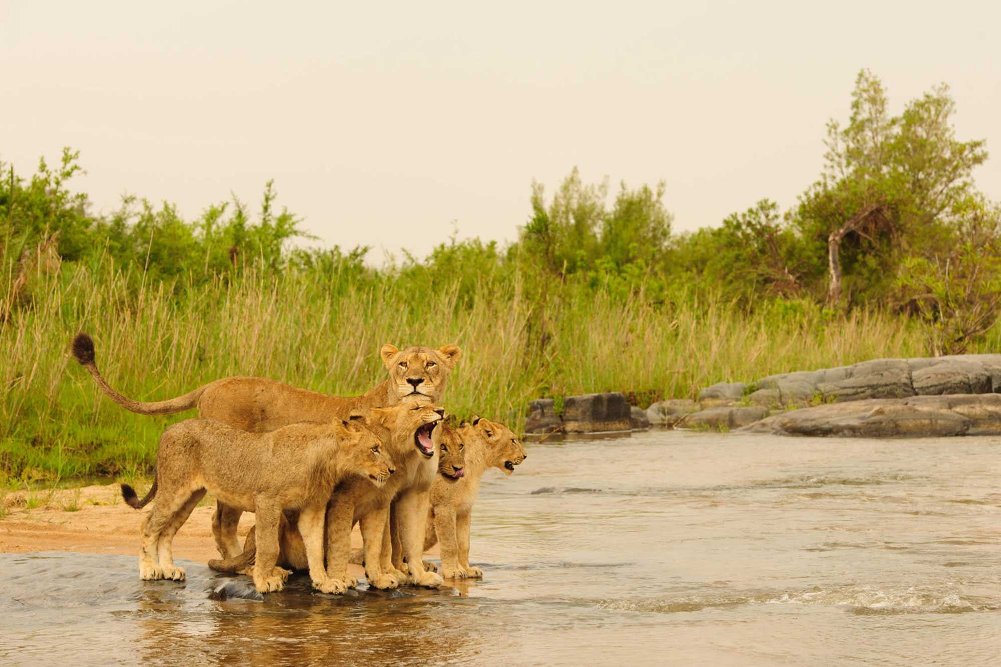 Timbavati-Private-Nature-Reserve
