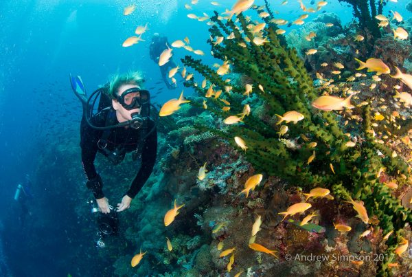 Southern Leyte Diving