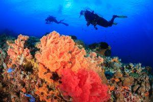 FRENCH POLYNESIA - TAHITI