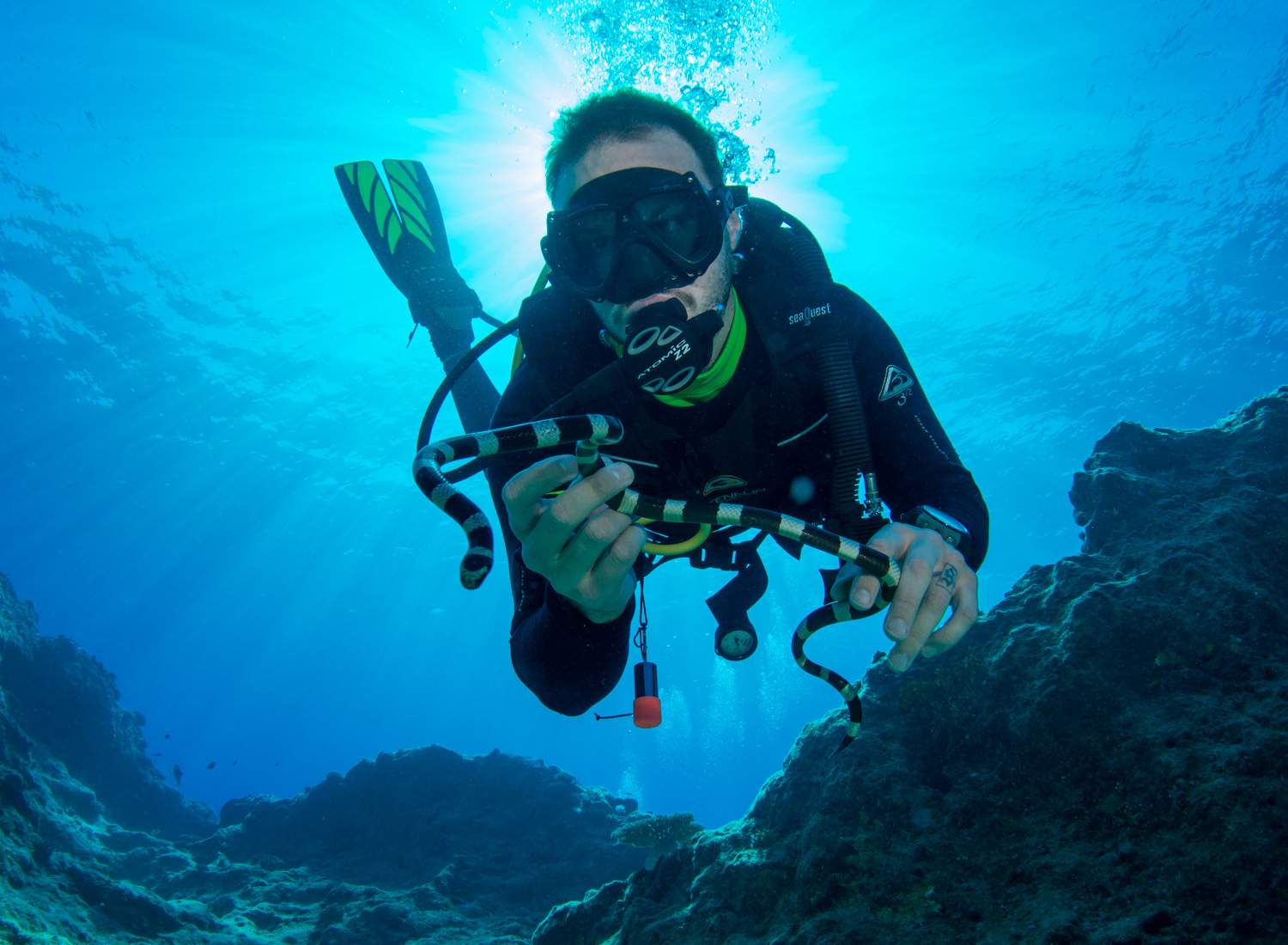 4 Worthwhile Things to Look Forward to When Diving