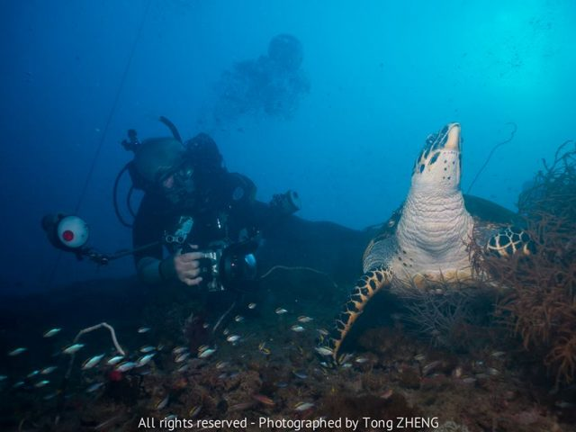 best diving sites in the world