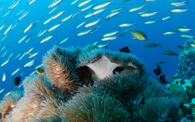 best diving sites in the world - solomon island